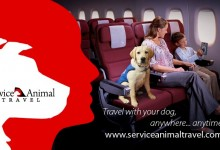 Travel Companion | Bring Your Pet Along With Service Animal Travel